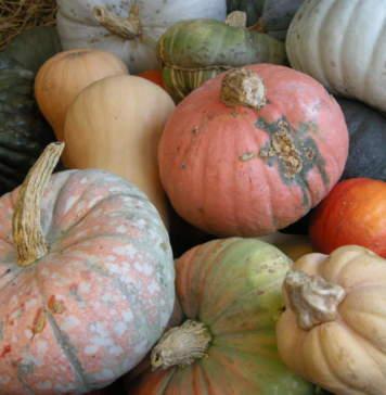 orto novembre zucche