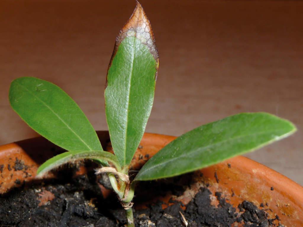 Terra Buona Per Giardino talee di piante da giardino: come e quando farle - passione