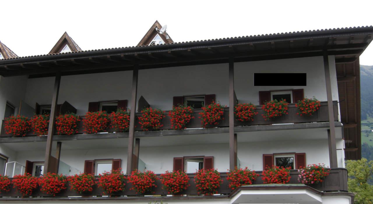 Geranio o pelargonium: come coltivarlo passione in verde
