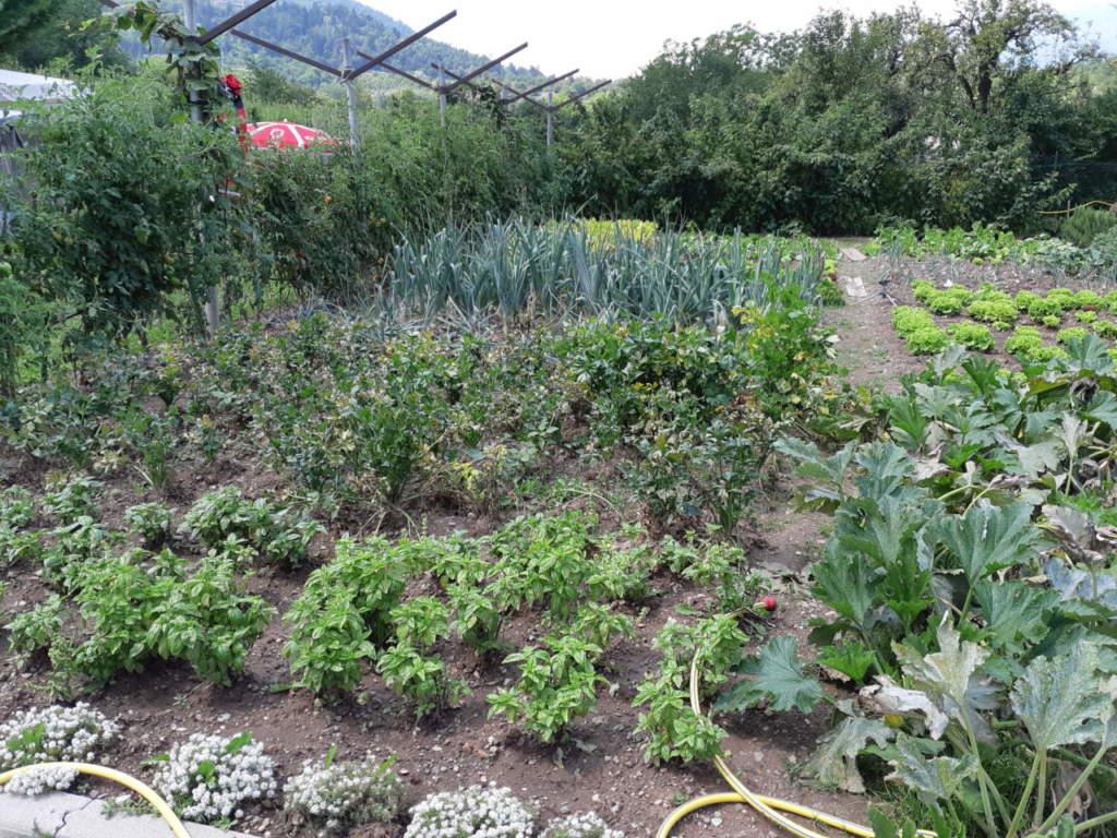Top Come fare l'orto e cosa coltivare - Passione in verde NU91