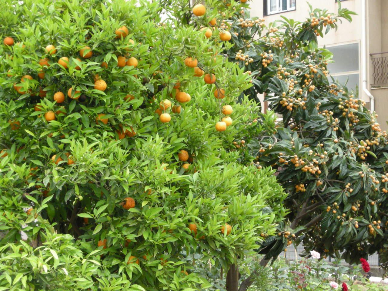 Come Far Morire Una Pianta come fare un frutteto - passione in verde