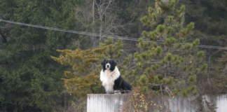 cane e freddo