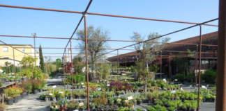 vivaio, garden center