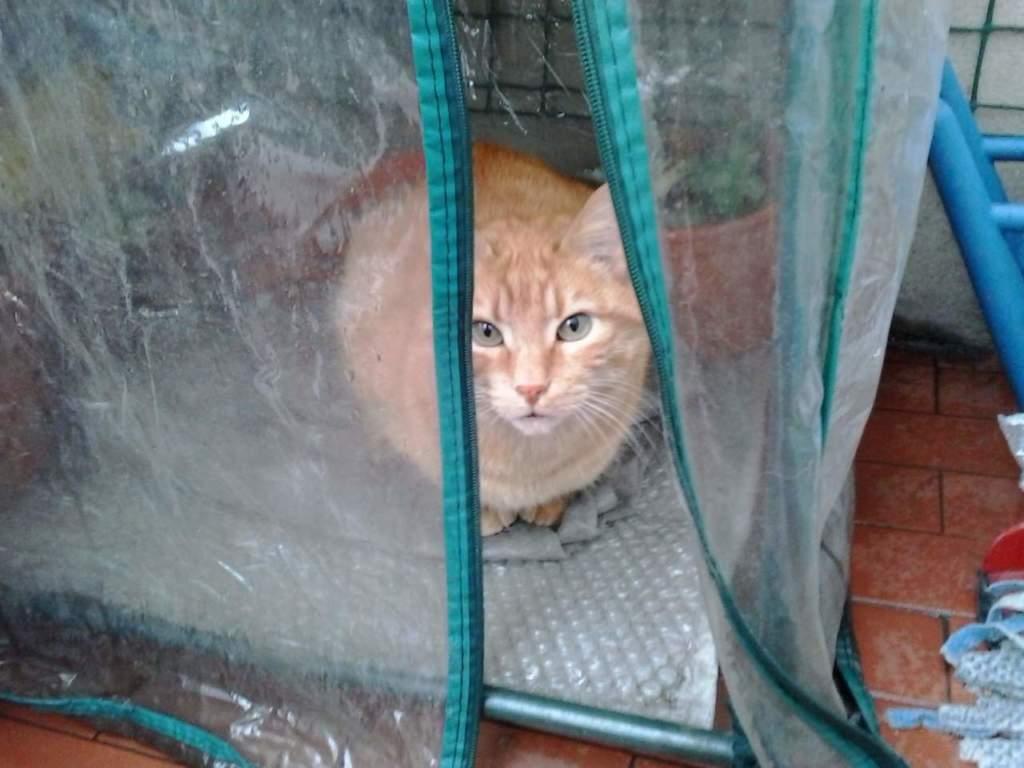 gatto riparato nella serra