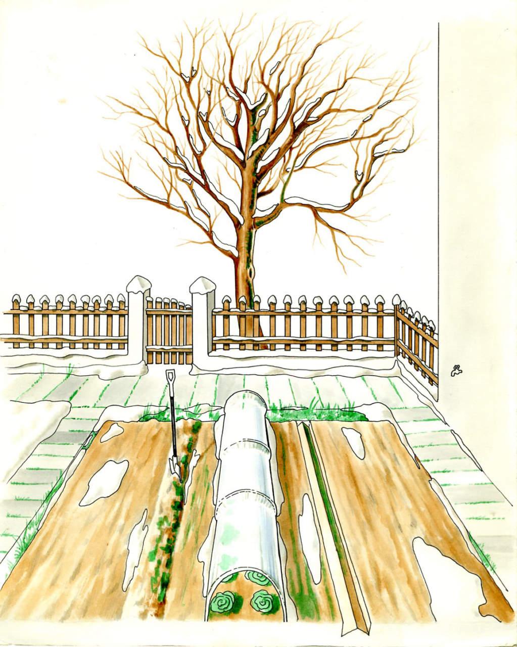 Cosa Piantare A Febbraio l'orto invernale - passione in verde