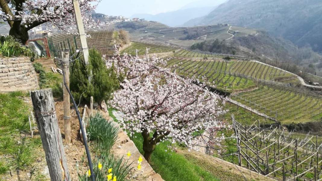 orto in primavera