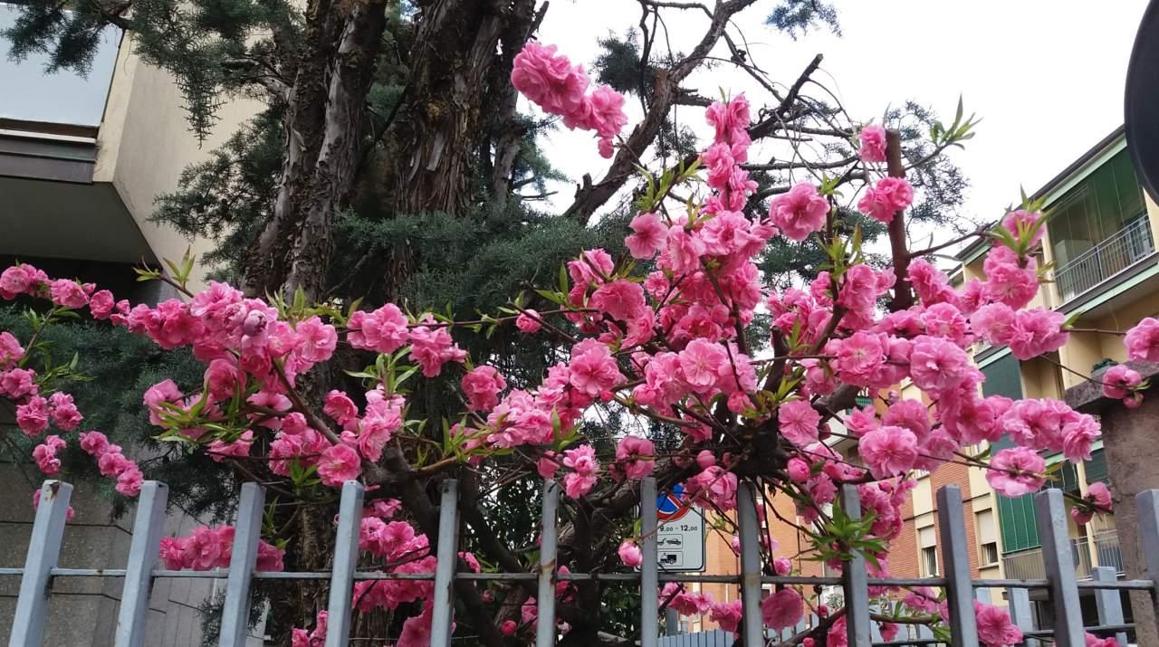 Calendario Lunare Marzo.Calendario Lunare E Giardinaggio A Marzo Passione In Verde