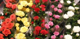 rose confezionate