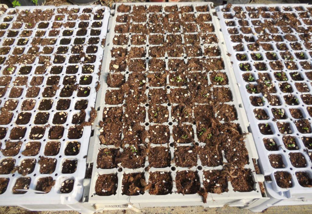 semenzaio piante grasse