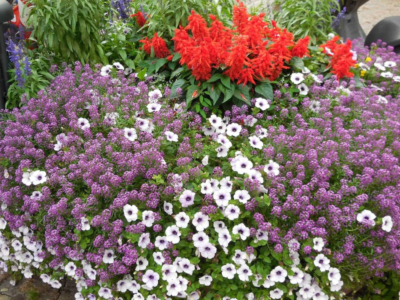 Piante Per Aiuole Perenni i lavori da fare in giardino in aprile (i parte) - passione