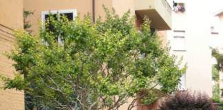 giardino_condominiale