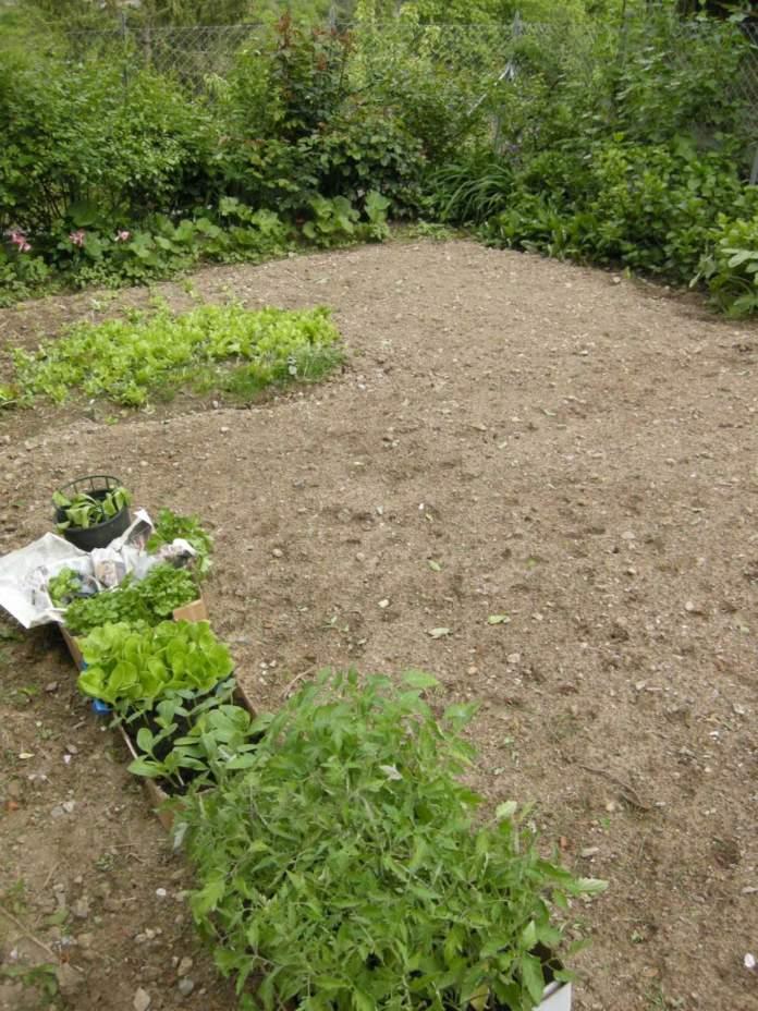 coltivazione orto in aprile