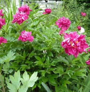 lavori da fare in giardino in maggio