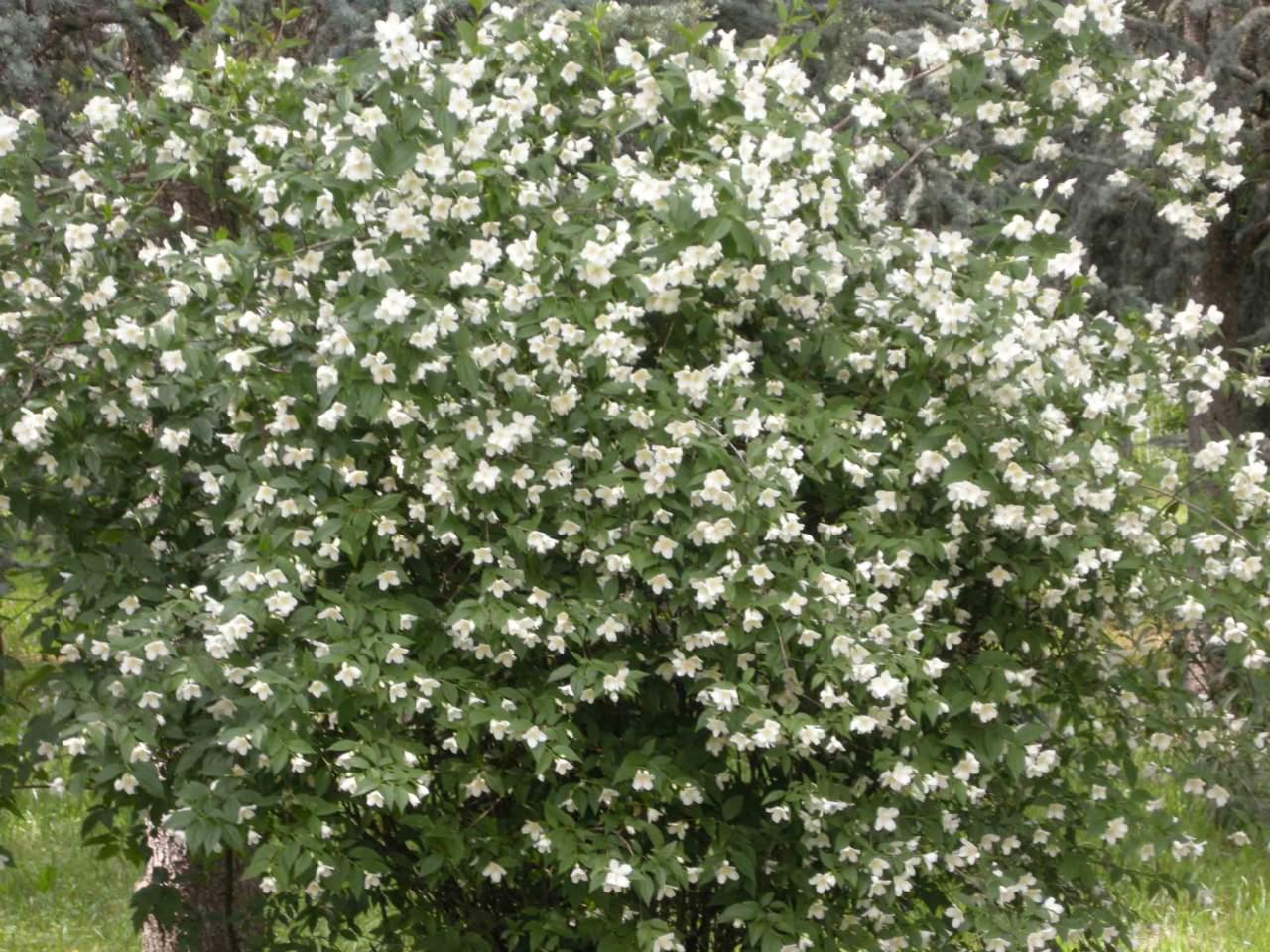Il Calendario Della Luna.Calendario Lunare E Giardinaggio In Maggio Passione In Verde