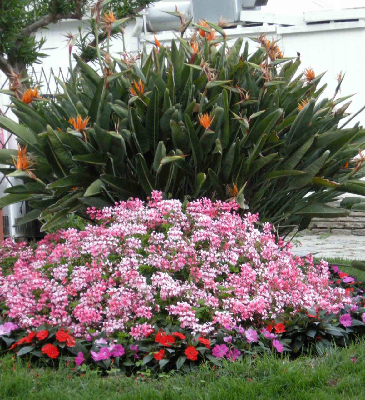 Rampicanti Che Crescono All Ombra il giardino in giugno: i lavori da fare (parte 2) - passione