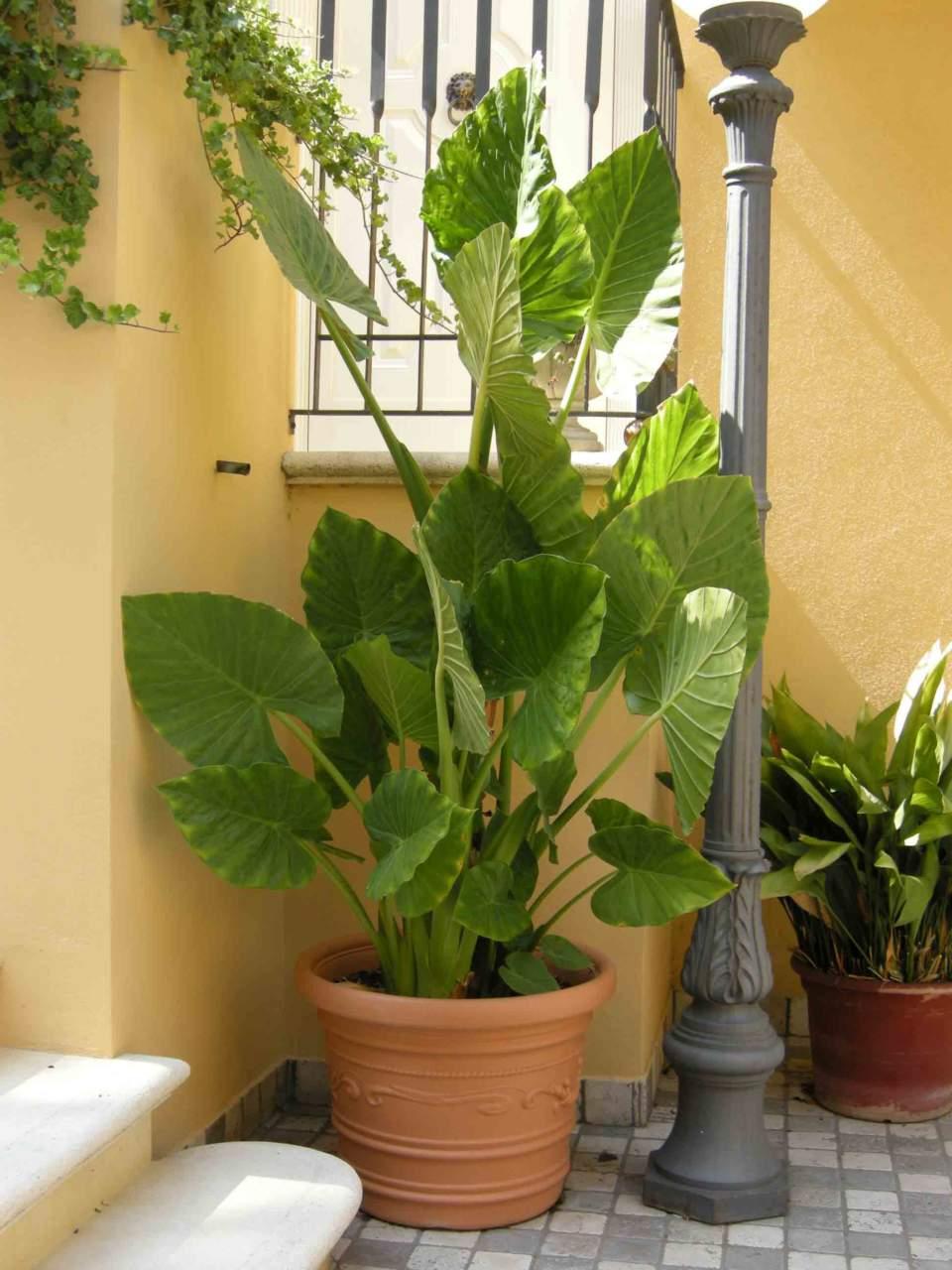 Piante Da Appartamento Ambiente Buio lavori in terrazzo a giugno: cura delle piante - passione in