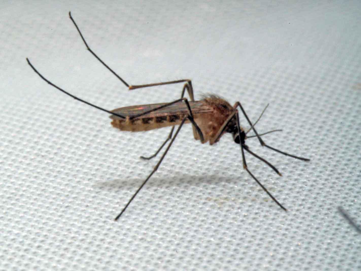 Allontanare Lucertole Dal Terrazzo 10 consigli per combattere le zanzare - passione in verde