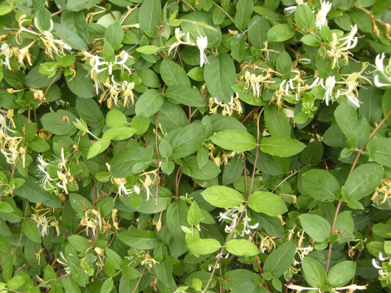 Calendario Lunare Potatura.Calendario Lunare E Giardinaggio In Giugno Passione In Verde