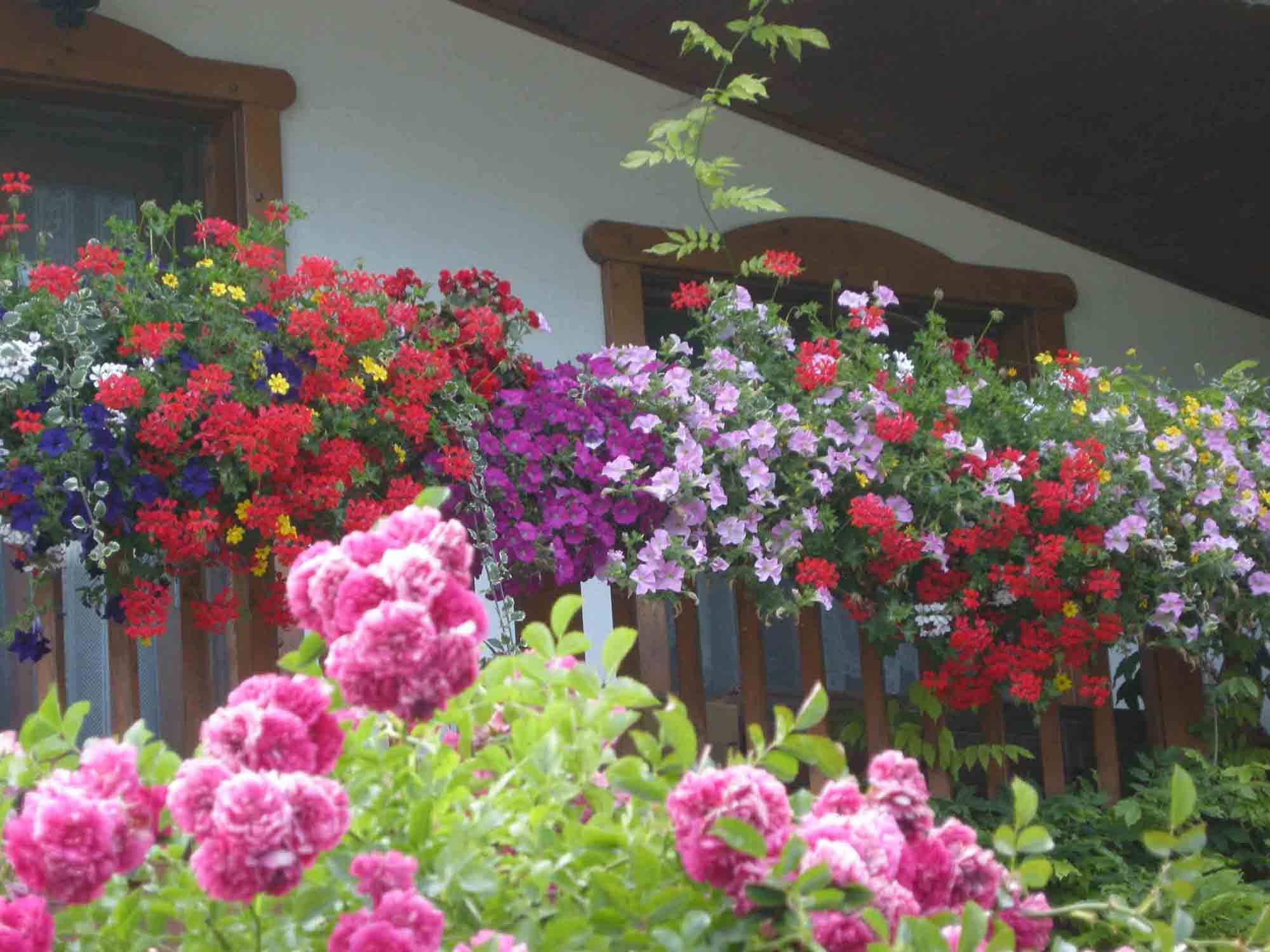 Rampicanti Che Crescono All Ombra giardino in luglio: i lavori da fare (parte 2) - passione in