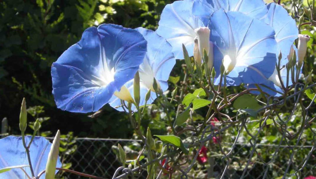 giardino in luglio