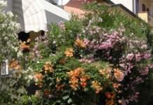 giardinaggio in luglio