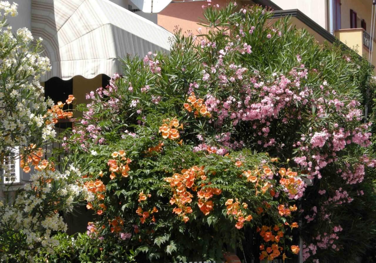 Fare Talee Di Oleandro calendario lunare e giardinaggio in luglio - passione in verde