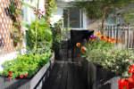 seccume su foglie di piante da balcone