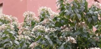 giardino in agosto