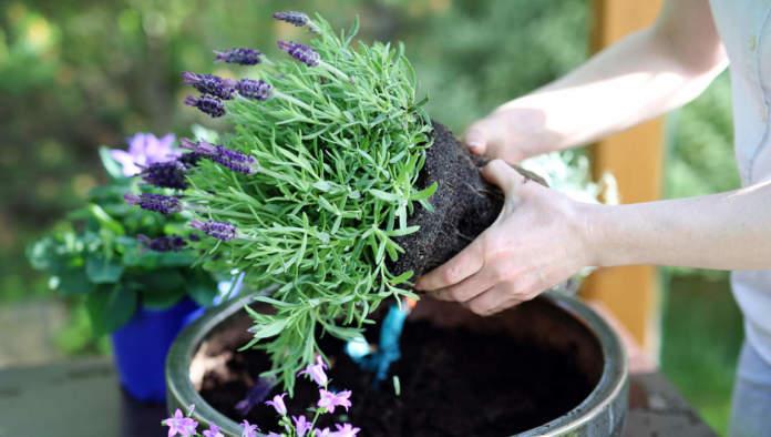 fioriere in giardino