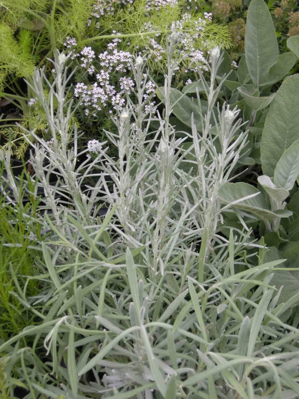 Piante Per Aiuole Perenni come creare un angolo per le piante aromatiche - passione in