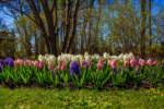 fiore da recidere tutto l'anno