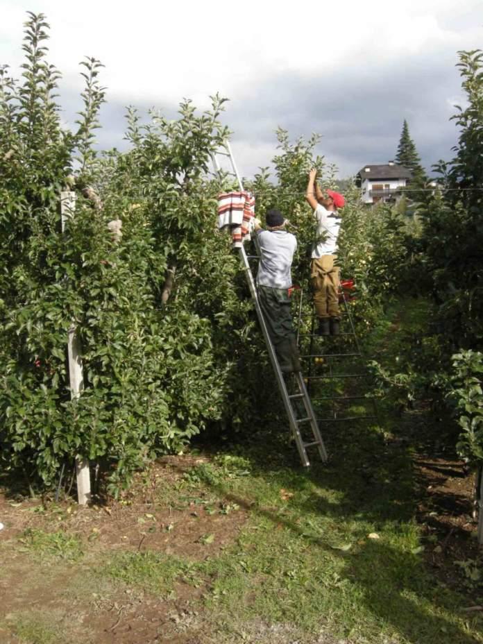 lavori da fare in settembre nel fruttoeto