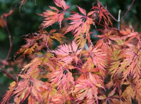 colori dei giardini in autunno