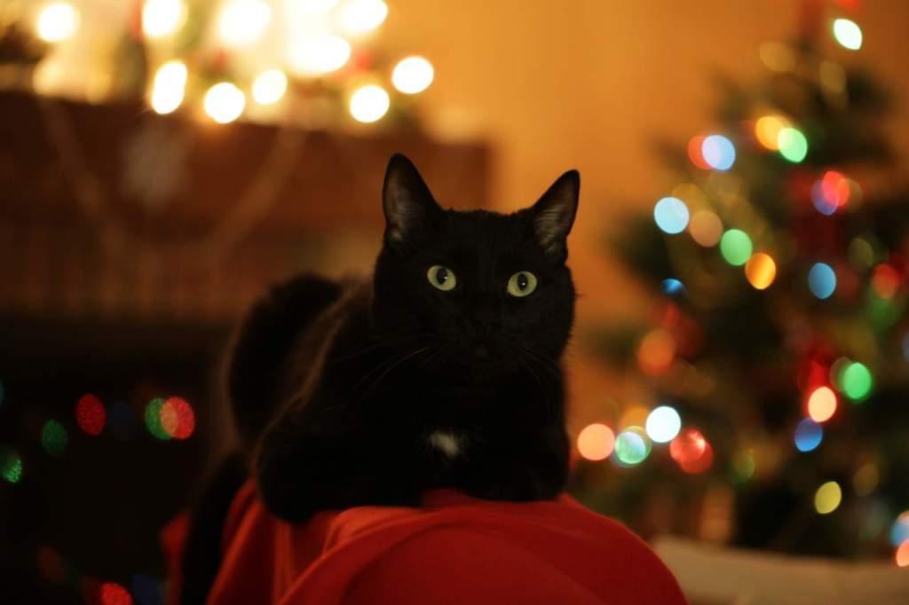 Albero Di Natale E Gatto Come Fare.Albero Di Natale A Prova Di Gatto Passione In Verde