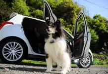 cane, macchina, kennel, trasportino