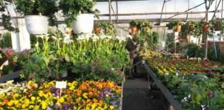 vendita di fiori