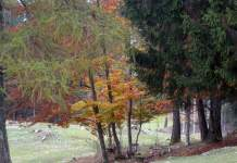 bosco, riforestazione