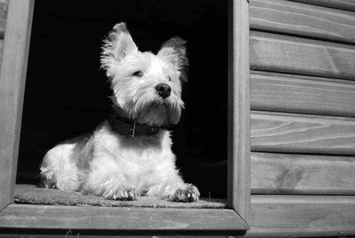 cucce da esterni per cani