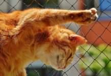 terrazzo in sicurezza per i gatti