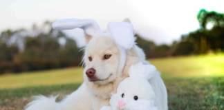 pasqua con cane e gatto