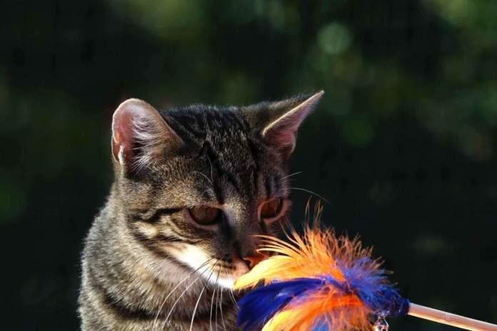 gatto uomo interazione
