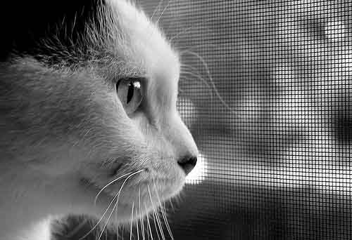 finestre sicurezza gatto