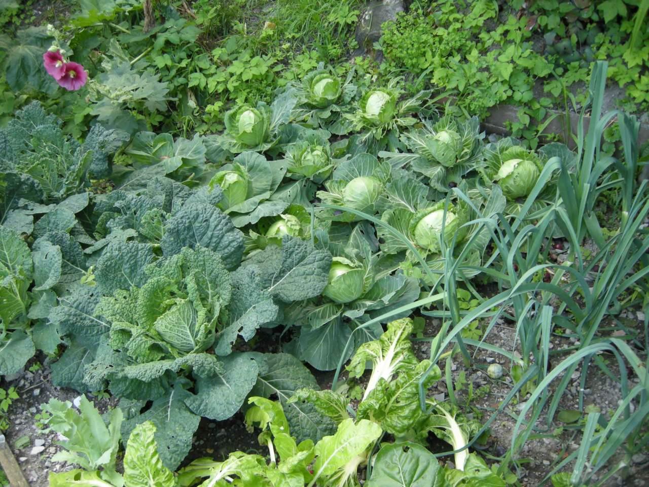 Manutenzione Giardini Milano E Provincia novità coronavirus: si può andare in orti lontano da casa
