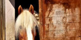 gomma riciclata cavalli