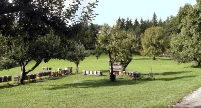 allevare api alveare