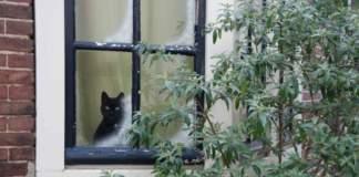 finestra gatti