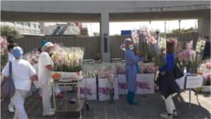 Coronavirus fiori italiani