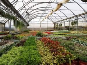 passaporto delle piante serra garden center