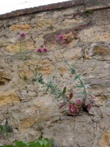 piante nei muri