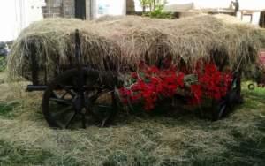 ecosostenibilità; vecchio carro di fieno con gerani